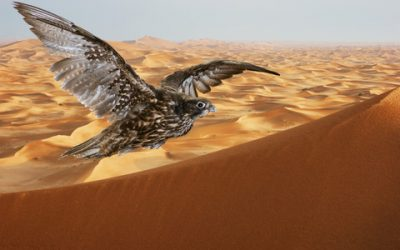 Falcons in the Arab world