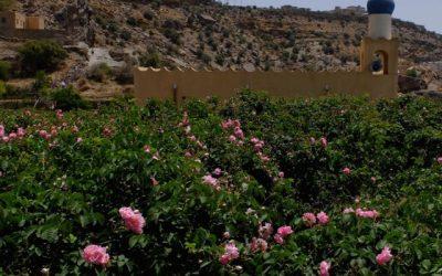 The rose gardens of Jebel Akhdar